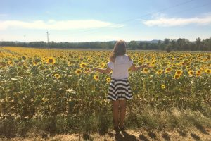 sun flowers in tuscany